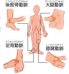 血流評価に用いる主な血管